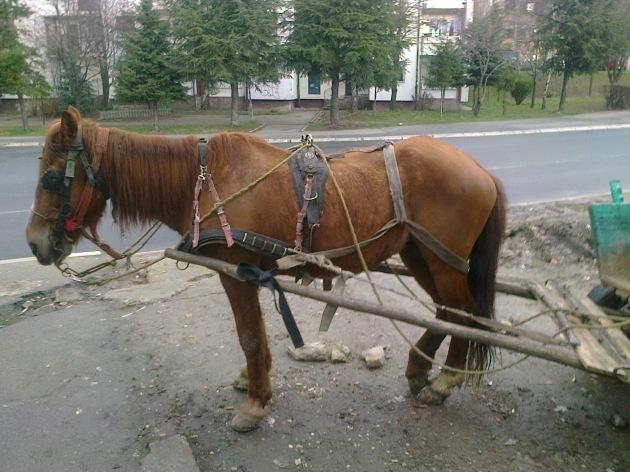 превозно средство, 1 коњ. снага, миријево, 11.03. 2013, снимак шоле соколовић
