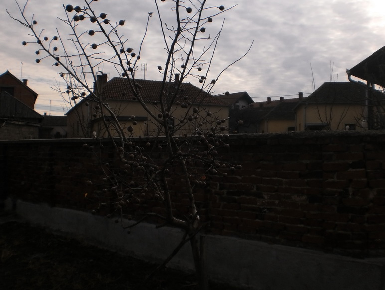 туробна зимска слика из мишљеновца, уточишта звишких л. - снимак иван лукић, зима 2012.