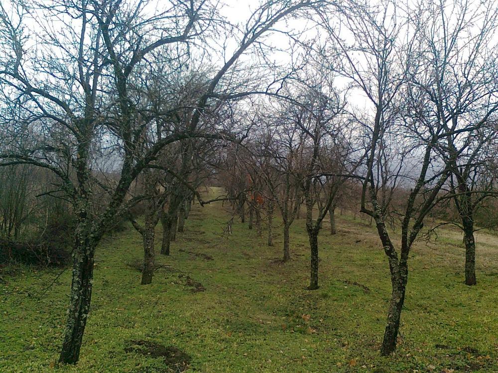 југ србије, село ивање, планина радан, мај 2012, воћњак,