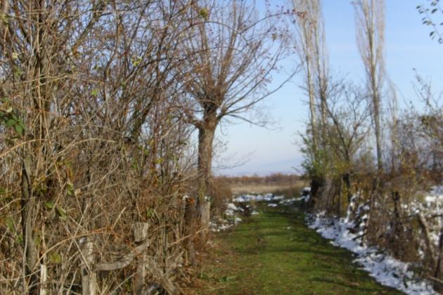 Уз Ивањску реку (Радан, децембар 2013, фотодокументација Заветина)